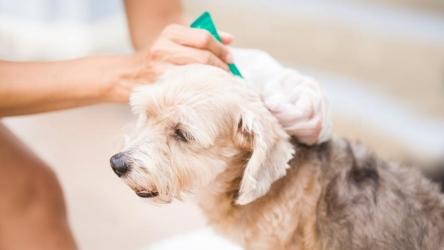Scegliere i migliori antiparassitari per cani, una guida minima