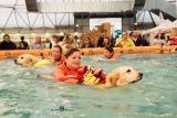 Milano, a Quattrozampe in fiera 2020 lo show dei cani eroi