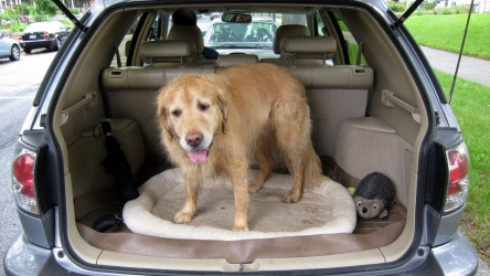 Viaggiare con il cane? Ecco alcuni consigli pratici