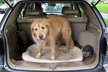 🐶 Viaggiare con il cane: ecco alcuni consigli utili