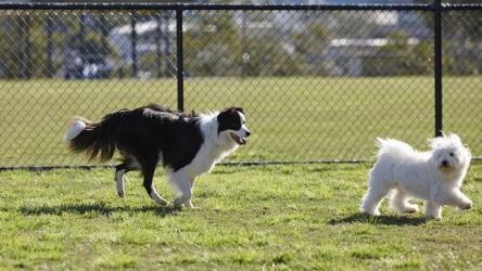 🐶 Area cani: evitatela se il vostro amico a quattro zampe è in calore
