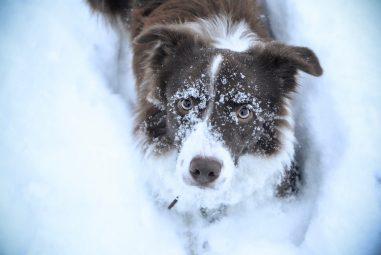 Il freddo e gli animali: come aiutare cani e gatti randagi e uccellini