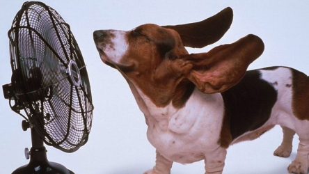 🐶 Caldo estivo: come proteggere il proprio cane dai colpi di calore