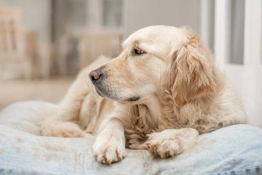 🐶 Artrosi dei cani: come curarla e come prevenirla
