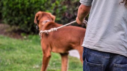 Brescia, ecco i corsi per Dog Sitter e Dog Walker di Doctor Dog