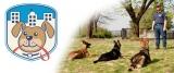 Castenedolo (Brescia), tornano i corsi per cani di Doctor Dog