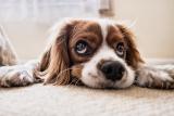 Perché possedere un cane fa bene? La risposta della scienza