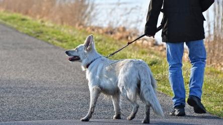 Passeggiare con il cane: quali sono le nuove regole oggi in vigore in Italia?