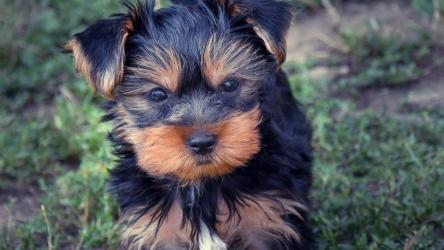 6 problemi di salute dei cani di piccola taglia che dovresti conoscere