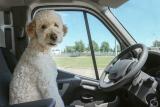 Inagine: l'89% degli italiani porterà in vacanza il proprio cane