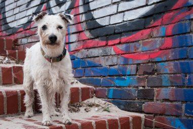 🐶 Il cane non vuole scendere le scale: come abituarlo