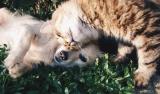 Coronavirus e animali da compagnia: facciamo chiarezza