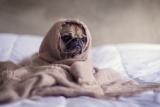 🐶 Cani e ansia di separazione dal padrone: quali sono le soluzioni