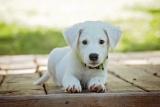 🐶 Addestrare un cucciolo: ecco alcuni consigli utili per educare il cane